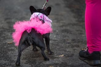 This pooch is in the pink for the fight against breast cancer.