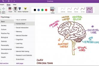 Microsoft OneNote provides students with a digital means of documenting what they learn.
