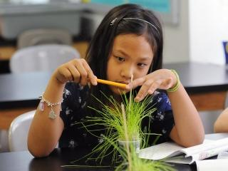 A 2nd-grade student measures her rye grass.